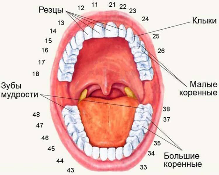 обозначение зубов