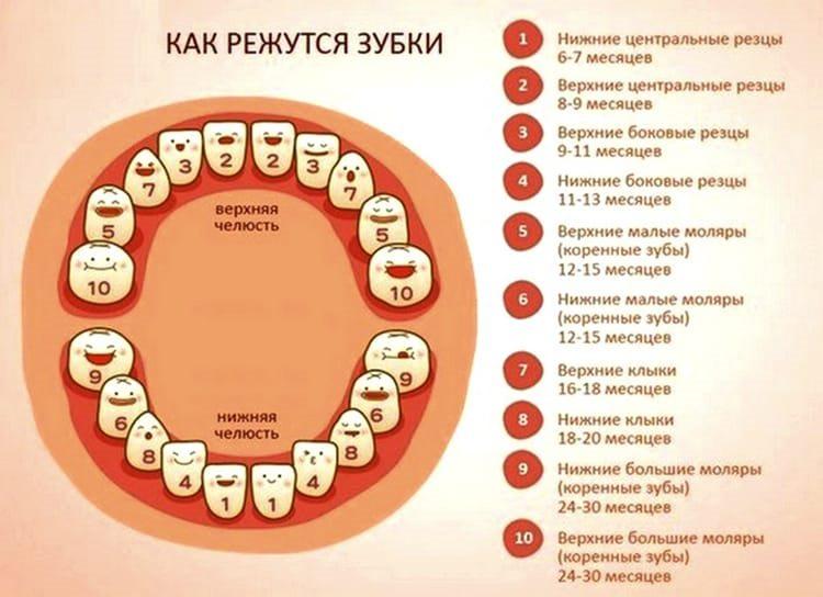 очередность прорезывания зубов у младенцев фото