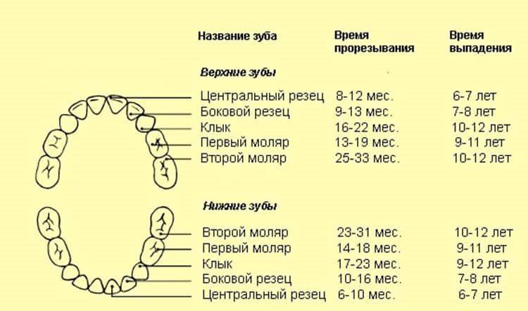 изображение с нумерацией молочных зубов