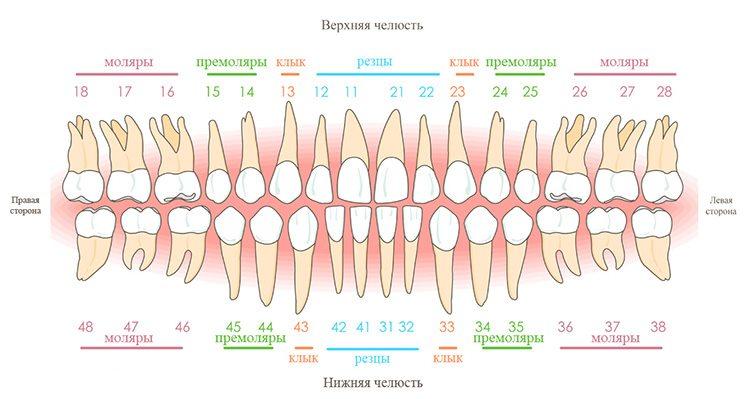номера зубов