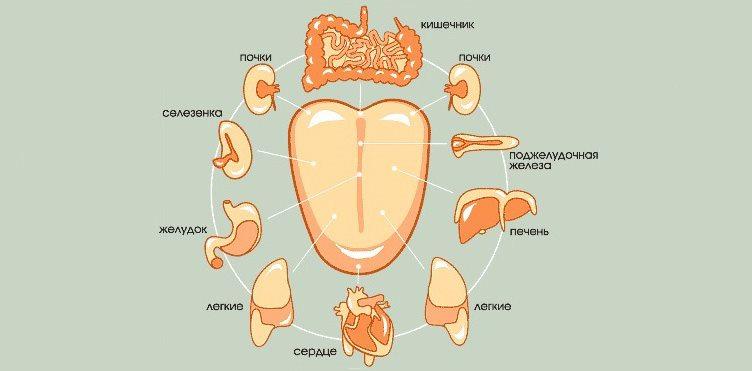 Состояние языка и органов человека