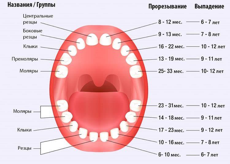 схема выпадения зубов