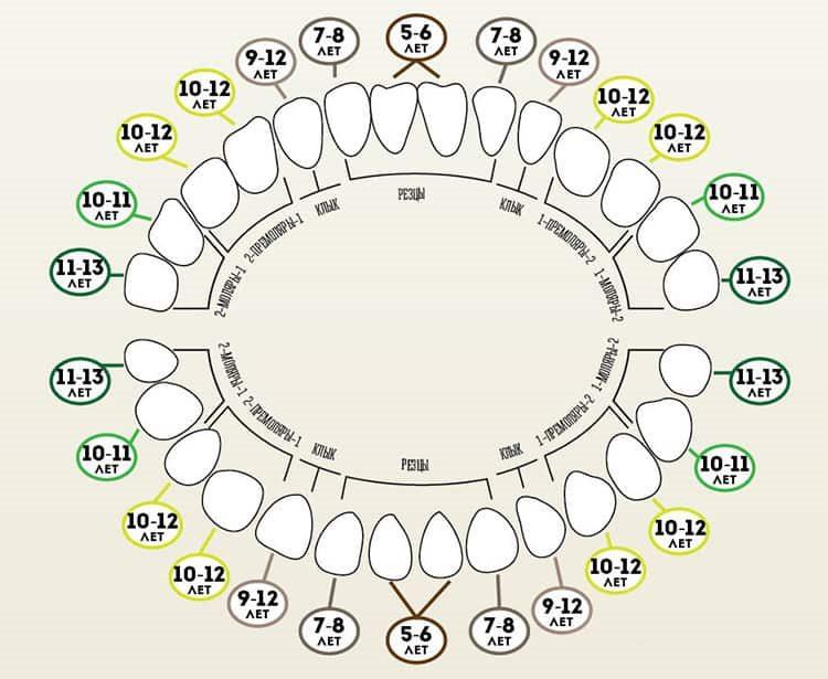 смена молочных зубов постоянными