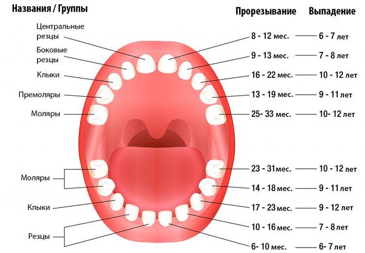 как выпадают молочные зубы
